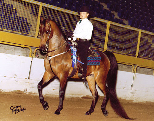 a horse wearing one of our Brown Cow Saddleblankets won the William Shatner Western Pleasure award at the 2007 Colorado Classic Horse Show